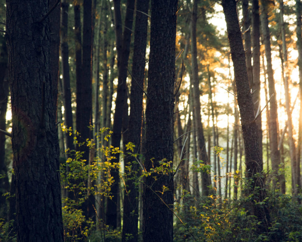 Spirande skog på grund av Korroterm